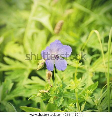 Flower Over Natural Background in Summertime - stock photo