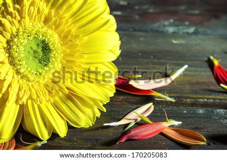 flower over wooden table on dark background, renaissance still life with dramatic light and textures