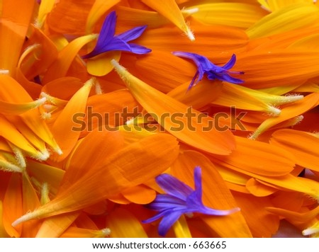 Flower pedals - stock photo