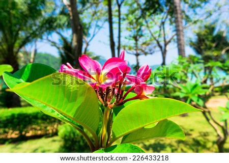 Flower Perspective Blooming Trees  - stock photo