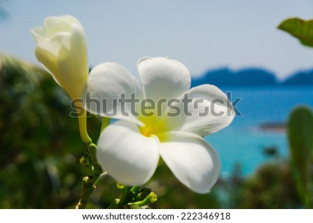 Flower Perspective Green View  - stock photo