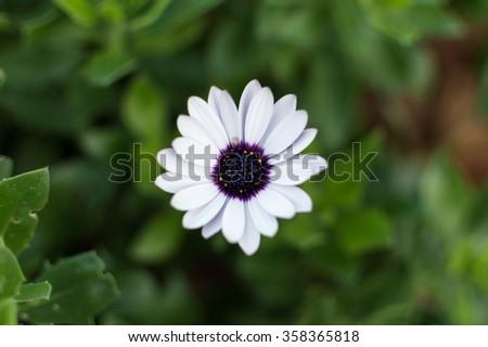 Flower petal - stock photo