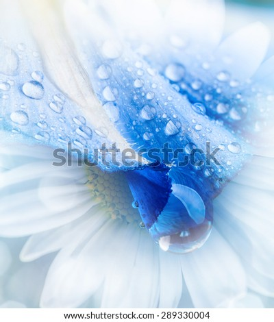 flower petal with drops - stock photo