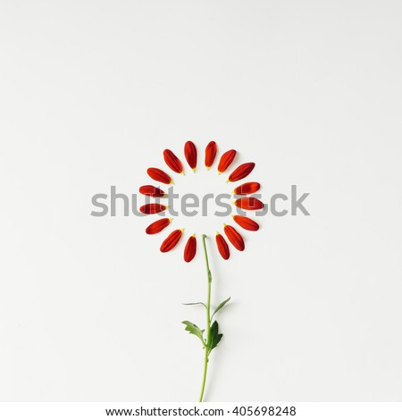 Flower petals arranged in circle. Minimal concept. Flat Lay. - stock photo