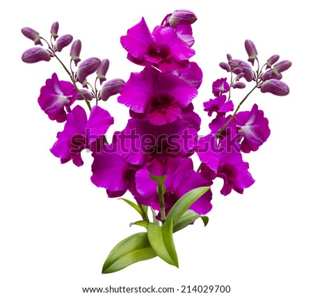 Flower Pink and purple streaked orchid branch isolated on white background - stock photo