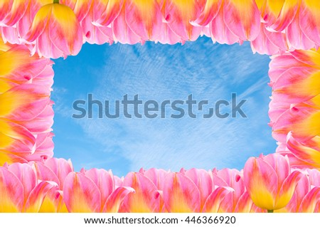Flower pink  beautiful tulips with blue sky as background