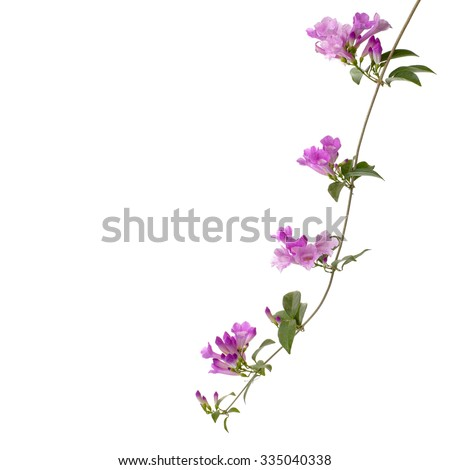 Art Paintings Abstract Rose Buds On A Vine