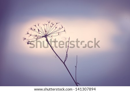 flower plant on summer morning sunrise - stock photo