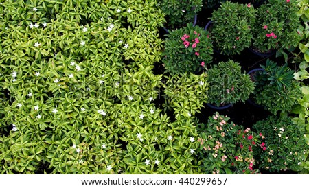 Flower Plants on Background
