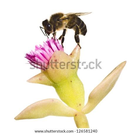 Flower pollen foraging - stock photo