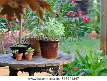 flower port on a garden table among other plant