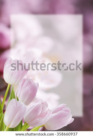 Flower postcard with tulip, empty sheet of paper, floral background