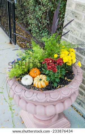 flower pot in the garden with pumpkins