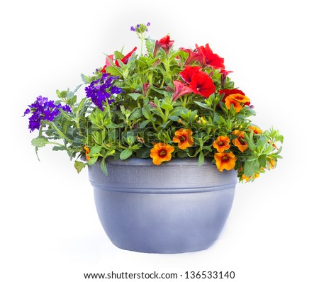 Flower pot isolated - stock photo
