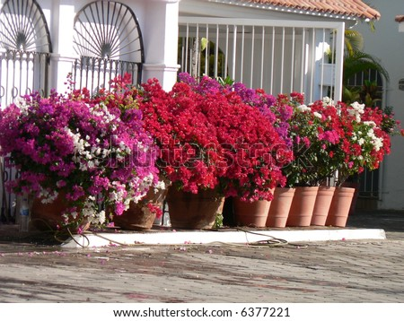 Flower pots in front of tropical home - stock photo