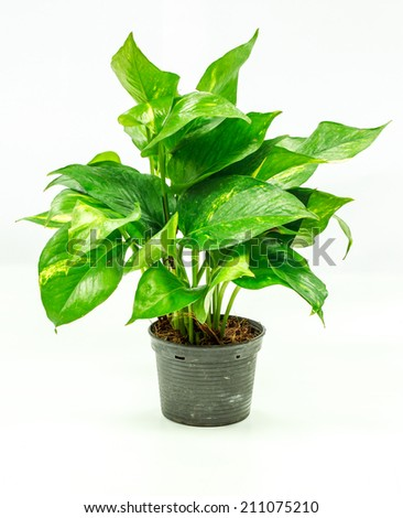 Flower pots on white background