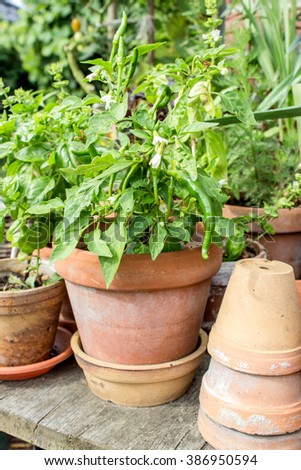 Flower pots with aromatic plants and herbs / vegetables / Flowerpots