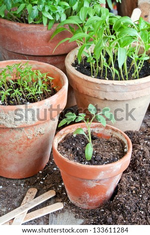 flower pots with plants/planting/gardening