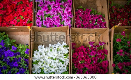 Flower seedlings at the counter