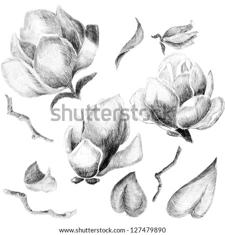 Flower sketch  set hand drawing - stock photo
