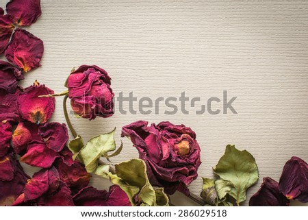 Flower tea rose buds on old wooden table. - stock photo