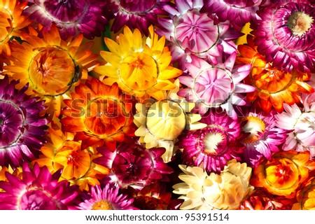 flower texture - stock photo