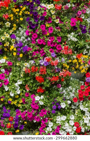 flower tower with multicolored petunias, vervains, geraniums and bidens - stock photo