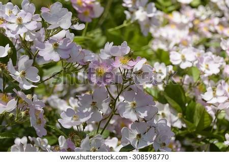 Flower tree - stock photo