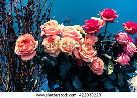 Flower wedding holiday decoration, beautiful pink roses blooming bouquet on blue background - stock photo