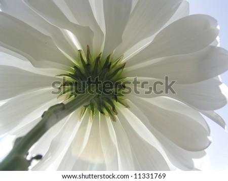 Flower_White flower against sky - stock photo