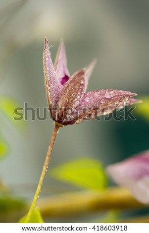 Flower with Dew Drops on a Spring Morning - stock photo