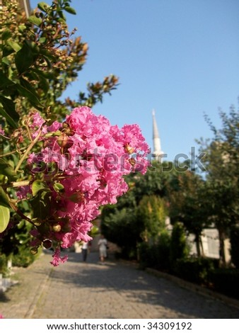 flower with mosque in background - stock photo