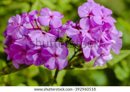 Flower with pink Impatiens and Osteospermum - stock photo