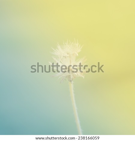 Soft Green Color Amusing Flower Yellow Green Color Tone Soft Stock Photo 238166059 Design Ideas