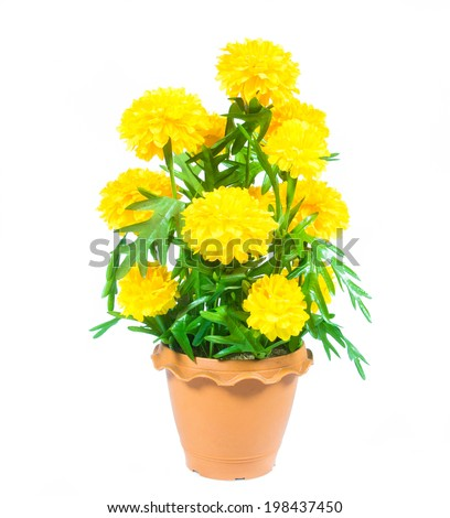 Flower yellow marigold in pot. Isolated on a white background - stock photo