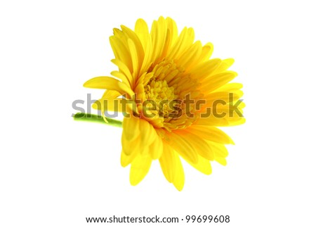 flower yellow on white background. Isolated bright colorful bloom - stock photo