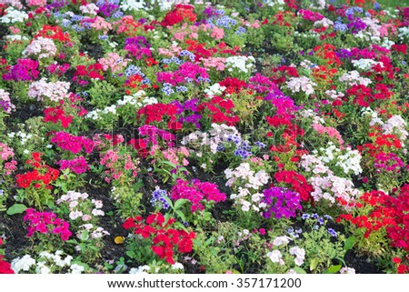 Flowerbed. Flowers of different color