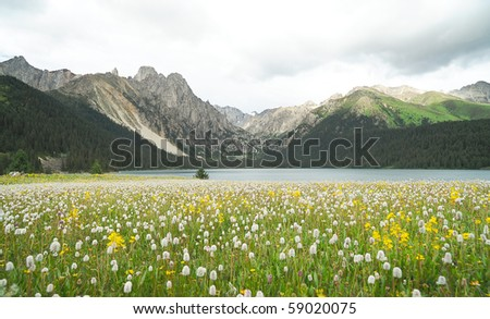 flowerbed, highland, lake and mountain - stock photo