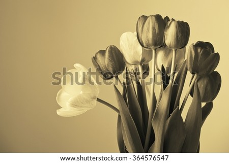 Flowerbed of tulips. Sepia toned image.