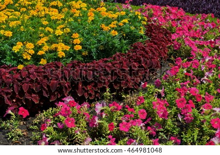 Flowerbed with colorful flowers - marigold, petunia and tradescantia, summer flowers