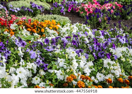 Flowerbed Stock Photos, Royalty-Free Images & Vectors - Shutterstock