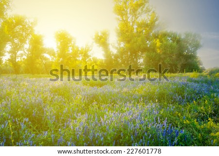 flowered forest glade at the sunset - stock photo