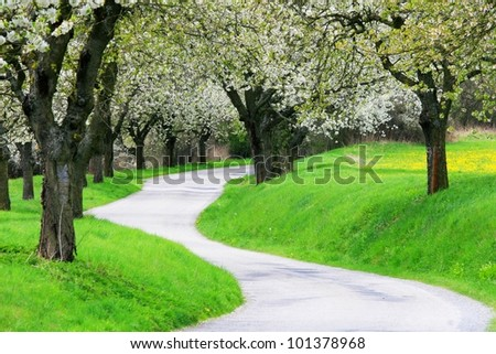 flowering alley, south Bohemia, Czech republic - stock photo