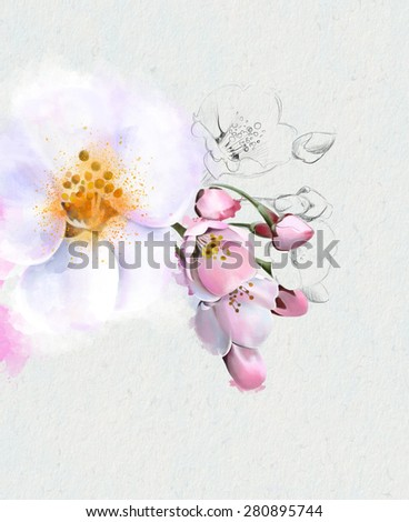 Flowering Apple trees. Spring flowering.Isolated on a white background. Watercolor illustration - stock photo