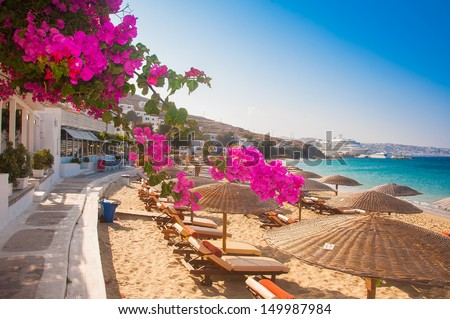 Flowering bougainvillea on the beach against the Mediterranean Sea - stock photo
