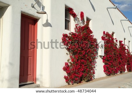 flowering bougainvillea plants and red door - stock photo