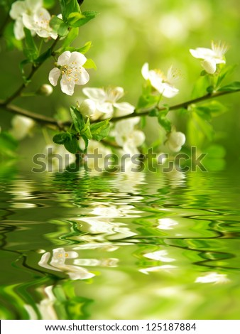 Flowering branch - stock photo