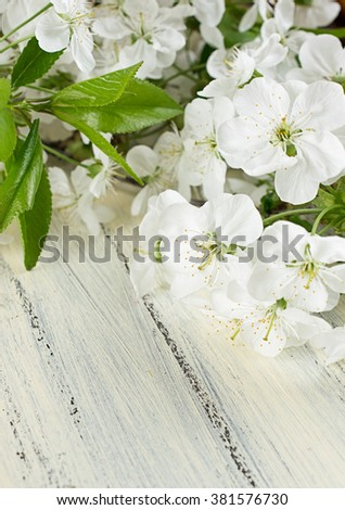 Flowering branch of cherry on the shabby wooden board