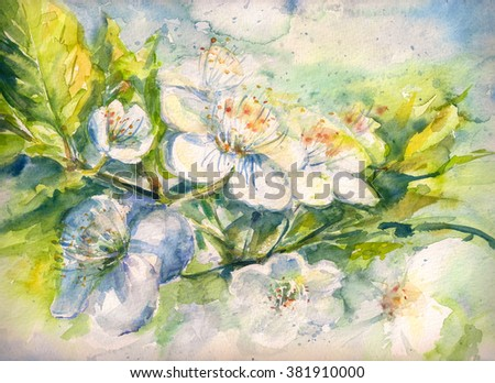 Flowering branch of the cherry tree watercolor painted - stock photo