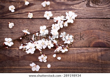 Flowering branch with white delicate flowers on wooden surface. Declaration of love, spring. Wedding card, Valentine's Day greeting. Wedding rings. Wedding bouquet, background. - stock photo